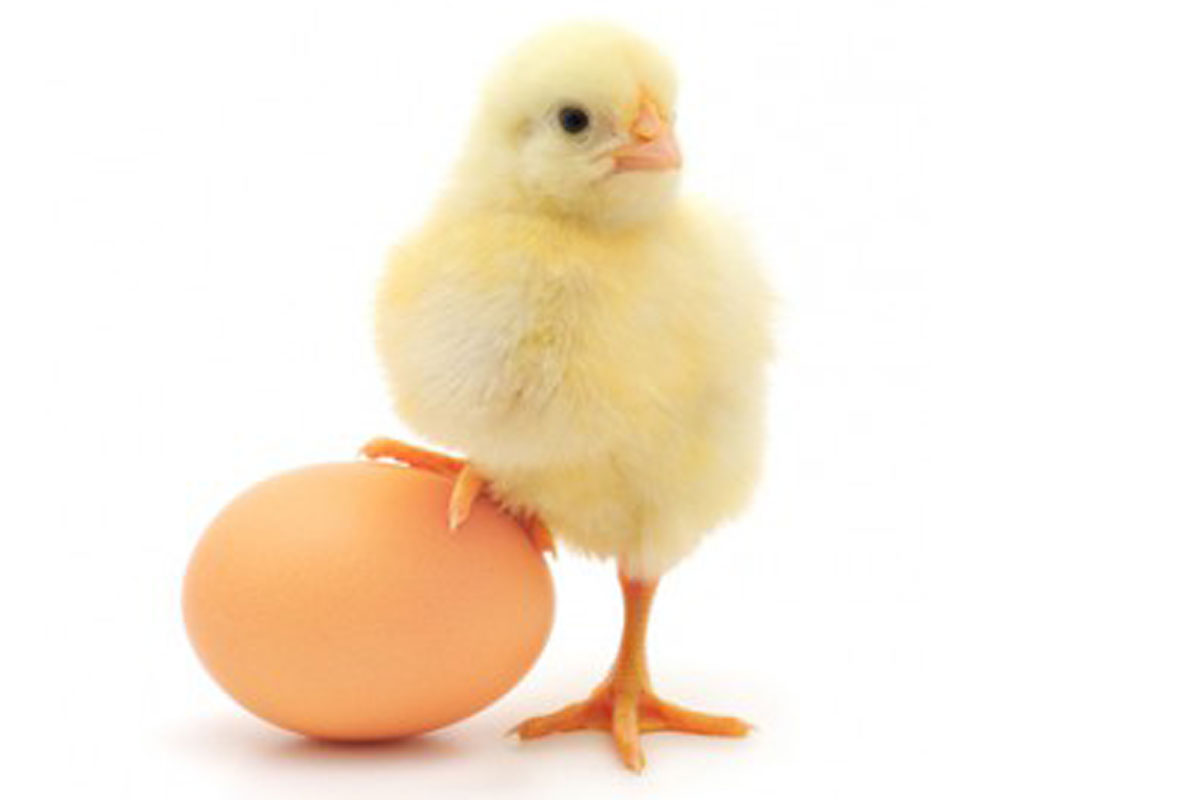 The Chicken or the Egg: Do Your Customers Know What They Need?